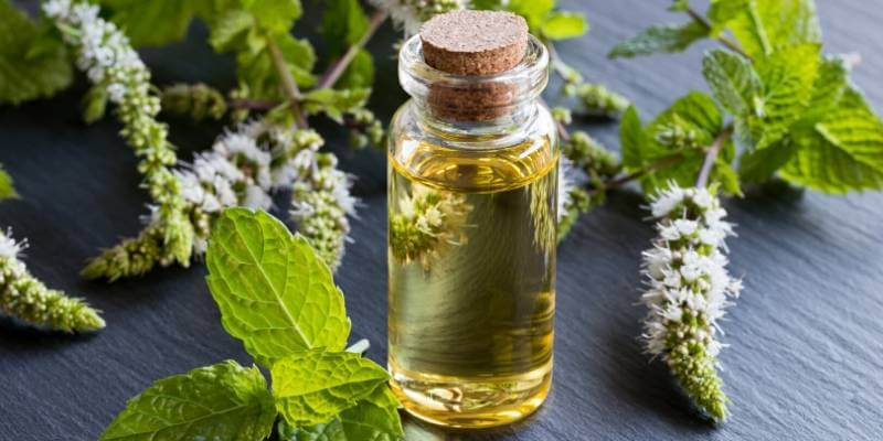 essential oils to help you quit smoking
