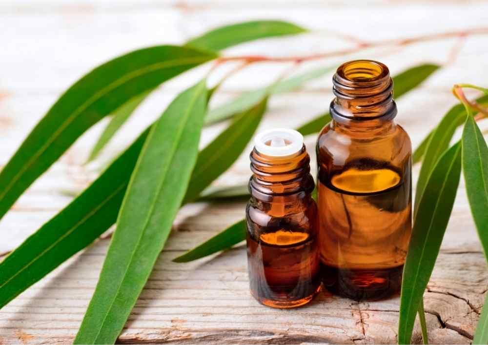 Eucalyptus-essential-oils-for-back-pain